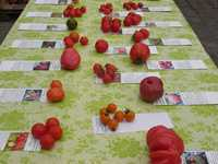 BIO-Tomaten Samen Collektionen