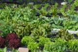 Bio-Saatgut Gemüse