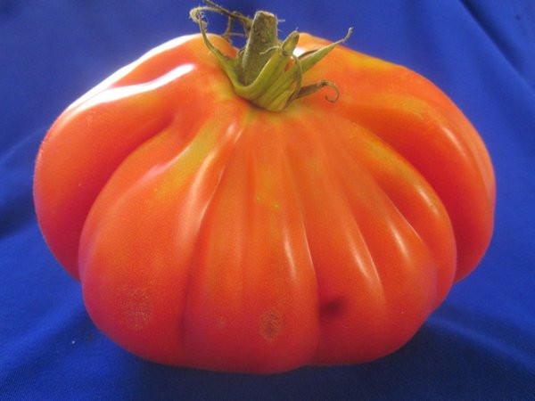 BIO-Pflanze Fleisch-Tomate Schwarzwälder Erdbeere Alte Tomatensorte