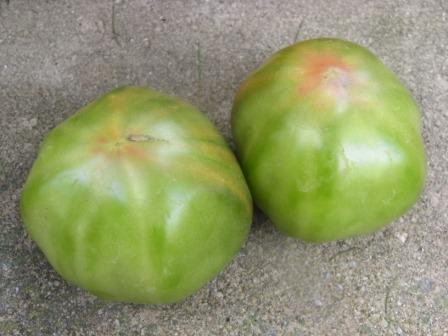 BIO-Pflanze Fleisch-Tomate Aunty Ruby's German Green Alte Tomatensorte