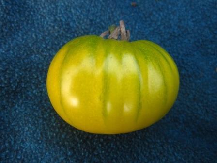 BIO-Samen Tomate Fleisch- Charly Green