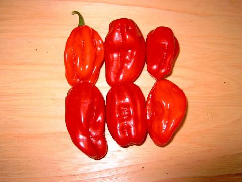 C BIO-Pflanze Chili leicht scharf NuMex Suave