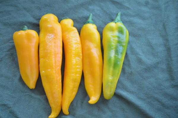 BIO-Samen Ochsenhorn gelb Spitzpaprika süß
