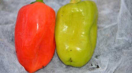 BIO-Samen C Paprika süß Nezhnost