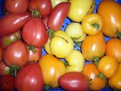 BIO-Samen Tomaten Fleischtomaten in 10 Sorten