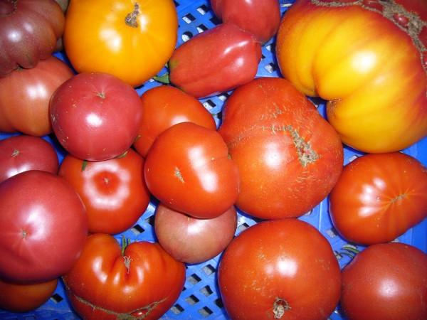 BIO-Pflanzen Tomate Fleisch- kraut&rüben Bio-Pflanzen-Paket