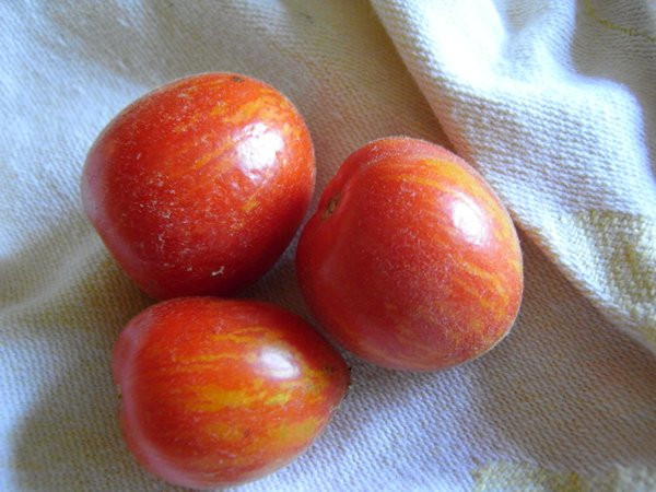 BIO-Pflanze Balkon-Tomate Fuzzy Wuzzy Alte Tomatensorte
