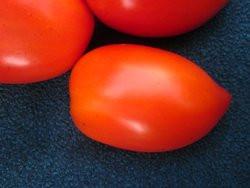 BIO-Pflanze Flaschen-Tomate Amish Paste Alte Tomatensorte