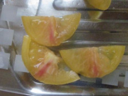 BIO-Pflanze Fleisch-Tomate Pink&Yellow Alte Tomatensorte