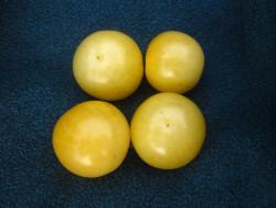 BIO-Pflanze Kirsch-Tomaten Weiße Kirsche