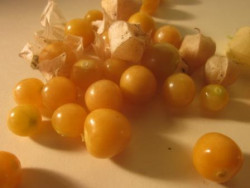 H9 Ananaskirsche BIO-Gemüsepflanze