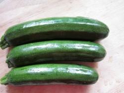 BIO-Gemüse-Pflanze Zucchini grün Zuboda