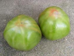 BIO-Samen Tomate Fleisch- Aunty Ruby's German Green