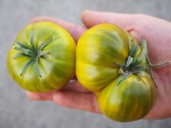BIO-Pflanze Fleisch-Tomate Charly Green