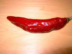 C BIO-Pflanze Chili leicht scharf Za Nizati