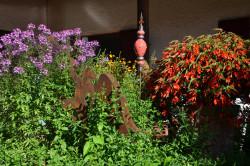 H5 BIO-Blumen Spinnenblume Senorita Rosalita