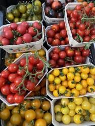 Bio-Tomatenpflanzen Naschtomaten Paket