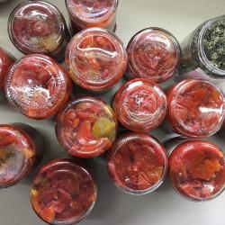 BIO-Tomatenpflanzen Soßen- und Suppentomaten Paket