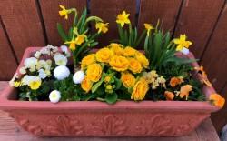 BIO-Balkonblumen Paket 'Sonnengruß'