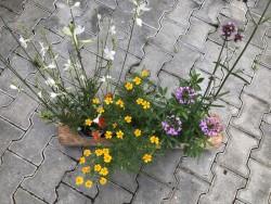 BIO-Blütenbalkon Bunte Bienenfreude