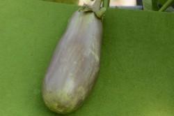 BIO-Pflanze Aubergine 'Dnjepropetrovsk'