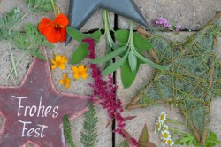 Adventskalender Kräuter - und Bienengarten