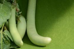 Bio-Pflanze Aubergine 'Thai Long Green'