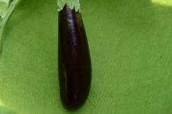 Bio-Samen Aubergine 'Lange Violette'