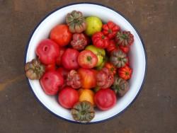 Bio-Tomatenpflanzen Paket Bunte Mischung 6 Stück