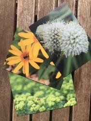 Postkartenset Insektenfreunde 3 Stück