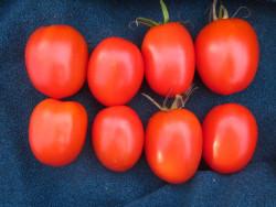 BIO-Samen Tomate Eier- DeBerao Rot