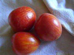 BIO-Samen Tomaten Balkon- Fuzzy Wuzzy