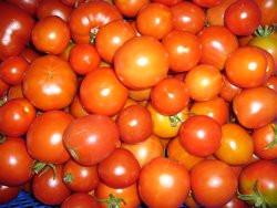 BIO-Samen Tomaten  Sortenmischung Buschtomaten