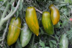 BIO-Samen Tomaten Busch-Flaschen- Green Sausage