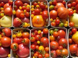 BIO-Samen Tomaten Angebot in 10 verschiedenen Sorten