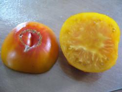 BIO-Pflanze Fleisch-Tomate German Gold BIO Alte Tomatensorte