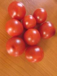 BIO-Pflanze Balkon-Tomate Minibel
